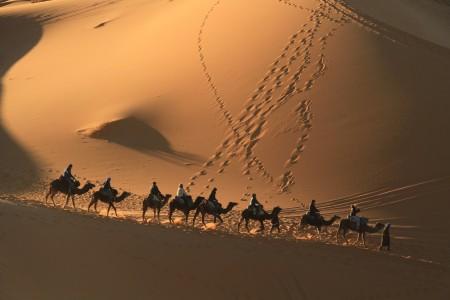 Marokko, Wüstentour, Kamel, Arabien,